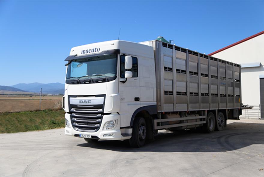 Transporte-ganado
